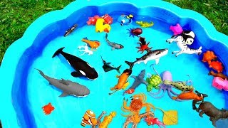 Learn Colors With Wild Zoo Animals Blue Water Shark Toys For Kids