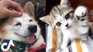 Cute Animal TikToks that Will Make Your Day Better 🥰