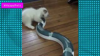 Funniest Cute Cats Compilation 2019 | Cute is More than Enough | HappyPets #49