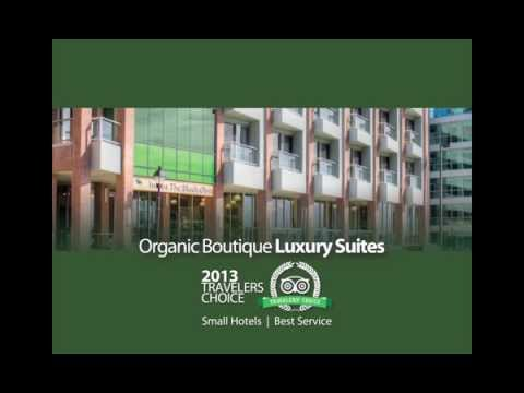 Inn at the Black Olive   Baltimore Best Hotel Review