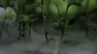 Proyecto Jirondai - Una sola huella