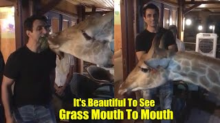 Sonu Sood feeding grass to Giraffe- Mouth to mouth..