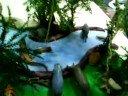 Maqueta selva y estepa