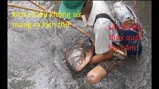 Kích cá ao cạn bắt cá chim khủng sống lâu năm | electricly fishing