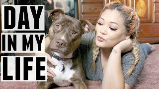 A Day In My Life with a Handicap Dog | JaaackJack + ZoeyTheLabPit