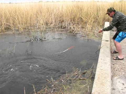 Рыбалка с луком КАРП