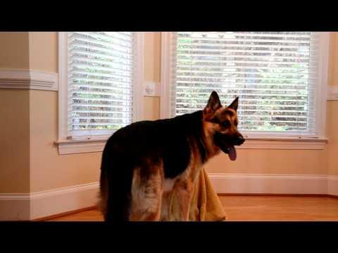 Како малото кученце Софи, постојано се снаоѓа да излезе од кафезот?