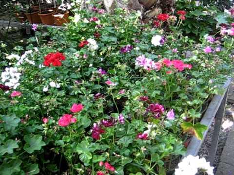 Rincones De Mi Casa Flores Y Plantas Musica Movil