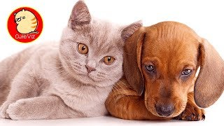 Cute Funny Cats and Dogs Compilation - Episode 01