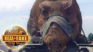 LIVING DINOSAUR CAPTURED IN AFRICA - real or fake?