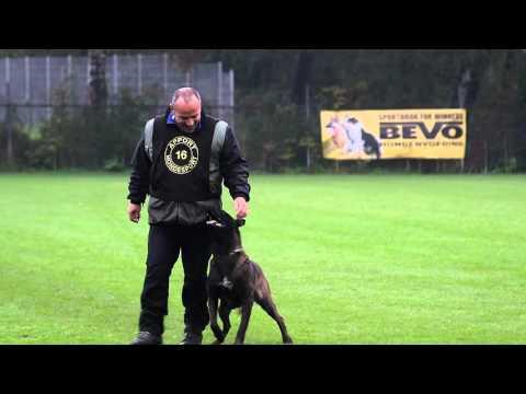 NIK 2015  Erik Köpp Loco van de Berlex hoeve Obedience