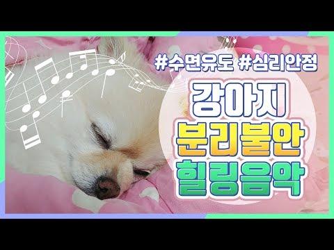 강아지 힐링음악, 강아지가 좋아하는 음악 🎵(혼자두고 외출할때 틀어주세요)/ 분리불안,심리안정,수면유도 healing, relaxing music for dog
