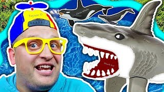 Does SHARK live in Water? Learn Sea animals and Wild animal with Toysee playing toys in a blue tub
