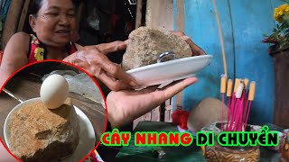 Hòn đá khiến quả trứng đứng thẳng và di chuyển được cây nhang của bà lão bán vé số I Phong Bụi