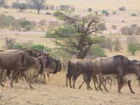 Serengeti National Park which know for its Great Migration