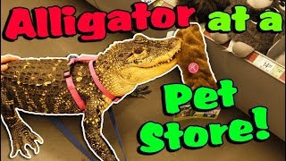 My Alligator Picks out a New Toy at the Pet Store!