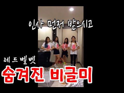 레드벨벳 (Red Velvet) -  숨겨진 비글미