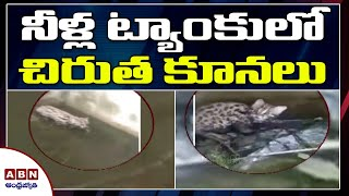 Leopard cubs stuck in water tank rescued, exclusive visual..