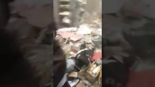 بالفيديو تفجير السنك     -