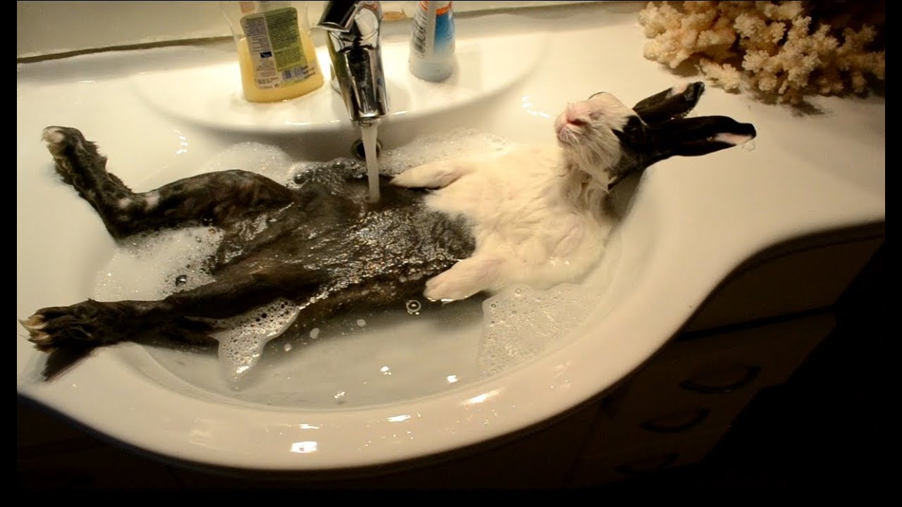 Bunny Takes A Shower Original Video Youtube