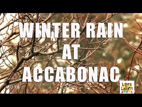 Lots To Learn Preschool Video - Winter Rain at Accabonac - Nature