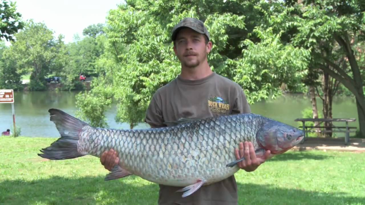 New State Record Grass Carp Caught - YouTube