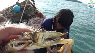 Theo chân người dân hòn sơn thăm lưới ghẹ 01 / Crab
