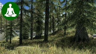 AMBIENT SOUND MEDITATION 🎧 Peaceful Forest (Skyrim Ambience | Wind & Bird Sounds | ASMR)