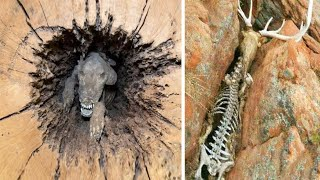 Animals That Nature Has Treated Unfairly