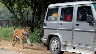 National Park  tiger attack Bannerghatta in Bengaluru