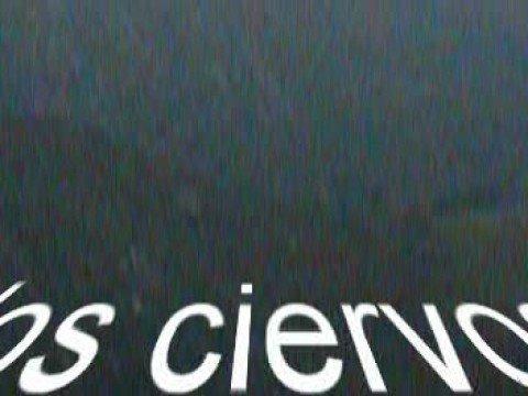 La Berrea de los venados en Asturias