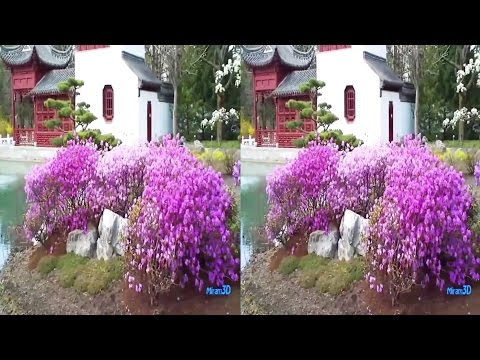 3D SBS VR - Beautiful Greenhouses and Chinese Garden in April