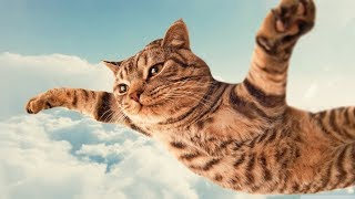 Crazy cats -  Funny cats - Funny compilation of cats -  Reverse video