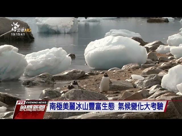 保育南極 綠色和平籲設威德爾海保護區禁捕撈