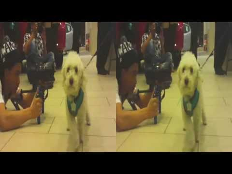 Dog Fashion Show @ Infinity Showroom (YT3D:Enable=True)