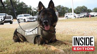 How a Bulletproof Vest Saved This Brave Police Dog's Life