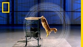 Cats vs. Gravity | Science of Stupid
