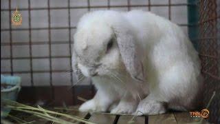 Pet Lover by JerHigh : ฟาร์มกระต่าย Bunny Delight