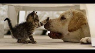Враг или друг? Смешные кошки и собаки - подборка приколов !