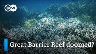 Can the world's warming oceans be saved? | DW News