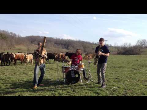 Дискотека для коров от Moon Hooch