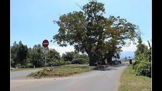 """Bí ẩn 3 cây sộp nằm án ngữ giữa quốc lộ được """"thần linh"""" ngự trị"""