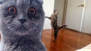 """Epic Funny Cats - Compilation Part Two """"The Cat Strikes Back!"""""""