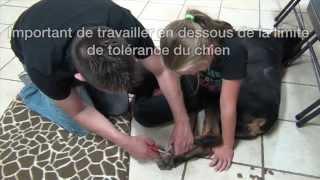 Couper les griffes en désensibilisation | Toilettage Comportemental TCAP