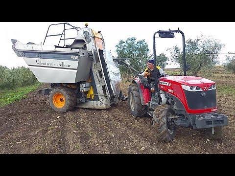 Raccolta olive meccanizzata 2017 con vendemmiatrice for Di raimondo macchine agricole
