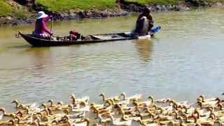 Đi chày cá ở đồng bằng sông Cửu Long - An Giang