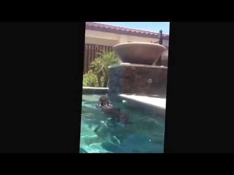 Part 1) paradise valley dog training ( k9katelynn) teaches boo boo ( labadoodle) how to swim to stairs to get out of pool in paradise valley,az! See more about Phoenix dog training at k9katelynn.com!