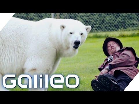 Der Größte Pitbull Der Welt Galileo Prosieben Videomovilescom