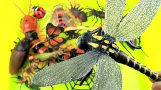 Best Insect Toys For Kids - Learn Bugs & Insect Education Video! RC Spider Centipede Scorpion Frog