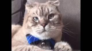 Happy cat cute cat funny cat SUPER WEIRD CATS